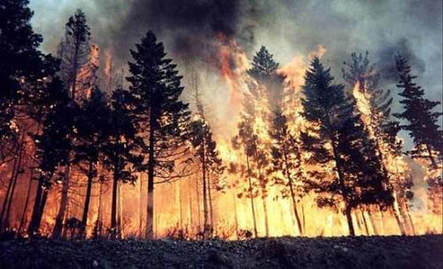 森林火灾防患于未然