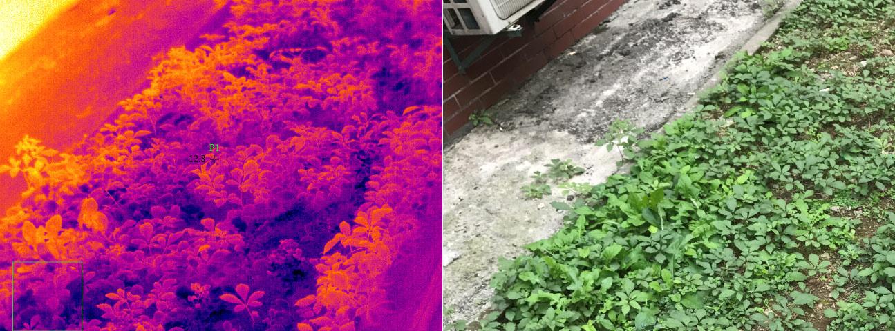红外热成像技术在植物病害检测中的应用