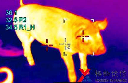 红外热像仪用于猪群体温监测