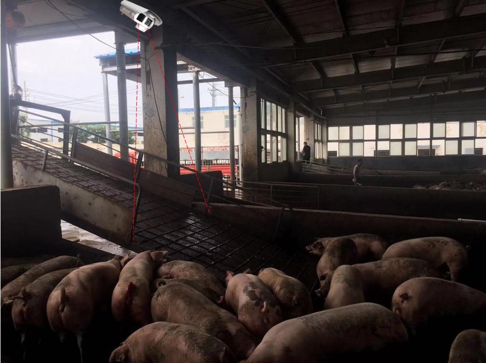 生猪屠宰场在线监控系统