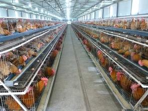 红外热像仪走进养殖行业