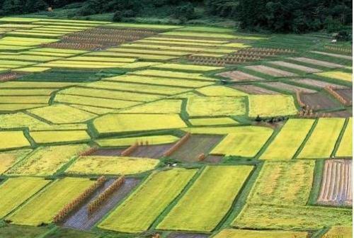 红外热成像技术走进农业生产